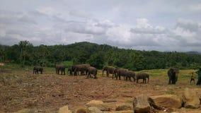 Elephants in the Jungle Stock Photos