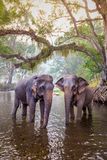 The elephants in  Kanchanaburi, Thailand. Stock Images