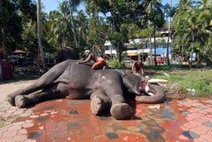 Elephants in Kerala culture Stock Photos