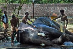 Elephants in Kerala culture Royalty Free Stock Photo