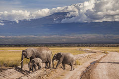Elephants on Kilimajaro mount background. Royalty Free Stock Photo