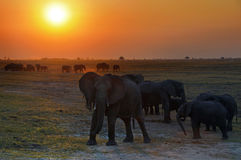 The elephants kingdom Royalty Free Stock Images