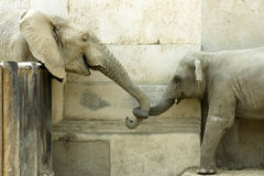 Elephants' Love stock photo