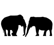 Elephants in love. Two elephants love card, isolated objects on white background Royalty Free Stock Image