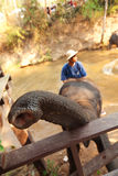 Elephants in Maesa Elephant Camp Stock Photography