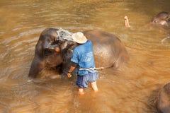 Elephants in Maesa Elephant Camp Stock Images
