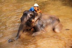 Elephants in Maesa Elephant Camp, Thailand Royalty Free Stock Photos