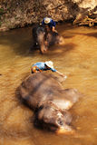Elephants in Maesa Elephant Camp, Thailand Stock Photo