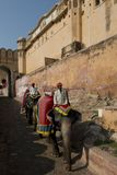 Elephants and Mahouts at Amber Fort Royalty Free Stock Photo