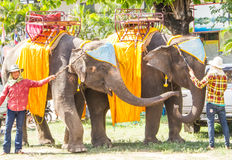Elephants with Mahouts. MAHASARAKHAM, THAILAND - May 18: Elephants with mahout waiing for join the Rocket festival grand opening on May 18,2014. Elephant is the Stock Photo