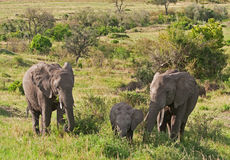 Elephants on the Masai Mara Stock Photo