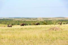 Elephants in Masai Mara Stock Images