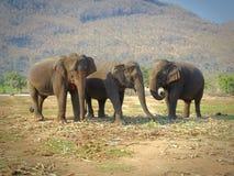 Elephants meeting stock photos