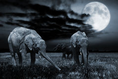 Elephants in moonlight Royalty Free Stock Image