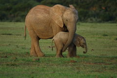 Elephants - mother and baby Stock Photo
