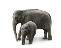 Elephants - mother and baby, in Zoo. Elephants - mother and baby, isolated with path, shadow stock photo