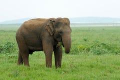 Elephants Stock Photos