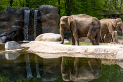 Elephants near the lake. And waterfall,reflection on water Royalty Free Stock Photo