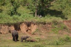 Elephants near mud bank Stock Images