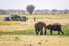 Elephants next to camping family, Kenya, Africa Royalty Free Stock Photo