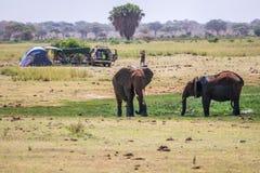 Elephants next to camping family, Kenya, Africa Stock Photos