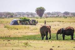 Elephants next to camping family, Kenya, Africa Stock Photo