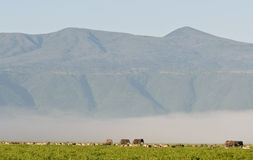 Elephants in Ngorongoro crater Stock Photo