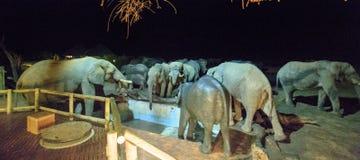 Elephants at night around the camp Stock Photos