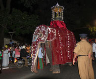 Elephants parade Stock Images