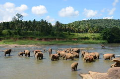 Elephants. In the pasture in the jungle Stock Photo
