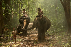 Elephants with people Royalty Free Stock Images