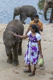 Elephants from the Pinnawela Elephant Orphanage relax on the bank of the Maha Oya River in Sri Lanka. Stock Photo