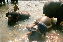 Elephants in Pinnawela / Sri Lanka Stock Photo
