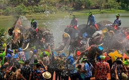 Elephants play water battle during Songkran. Elephants play water battle with tourists during Songkran festival in Ayutthaya province on April 11, 2018 royalty free stock photos