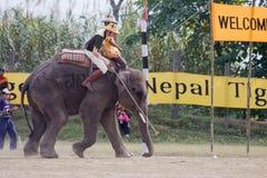 Elephants and players, during polo game, Thakurdwara, Bardia, Nepal Royalty Free Stock Photography