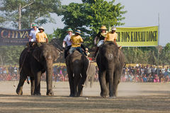 Elephants and players, during polo game, Thakurdwara, Bardia, Nepal Royalty Free Stock Photo