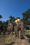 Elephants and players, during polo game, Thakurdwara, Bardia, Nepal Stock Images