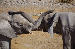 Free Elephants Playing Stock Image - 74433321