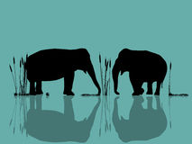Elephants playing in the water. Background  illustration with wild elephants in the water Stock Images