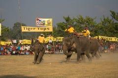Elephants polo players on their elephants during elephants polo, Nepal Stock Photos