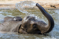 Elephants relaxes in the water Royalty Free Stock Photos