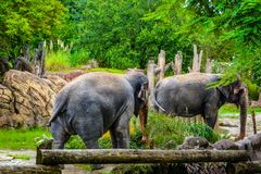 Elephants resting at the lunch Stock Image