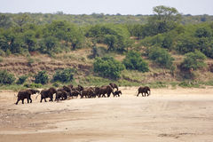 Elephants in a riverbed Royalty Free Stock Photos