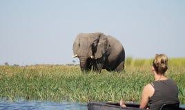 Free Elephants Roaming In The Wetlands Of The Okavango Delta In Botswana, Africa. Stock Photos - 159220943