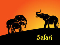 Elephants safari concept Royalty Free Stock Images