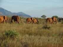 Elephants on the savanna. Tsavo National Park - Kenya 2007 Royalty Free Stock Photos