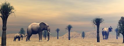 Elephants in the savannah Royalty Free Stock Photography