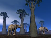 Elephants in the savannah Royalty Free Stock Photo
