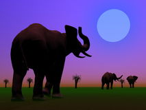 Elephants in the savannah by night Stock Photo
