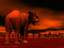 Elephants in the savannah by sunset Royalty Free Stock Image